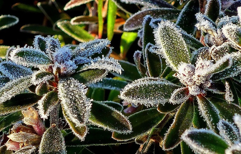 With The Onset Of The Cold This Week I Thought It Wise To Include As An  Initial Post Here, Some Advice On How To Care For Your Plants And Keep Them  From ...