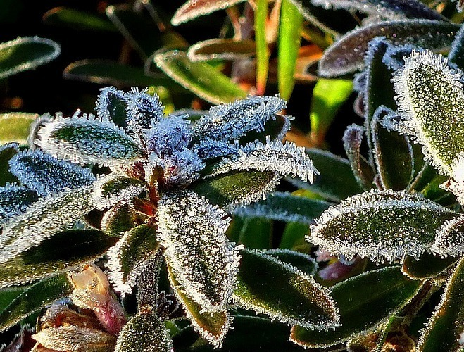 Winter Gardening Advice To Keep Your Garden Protected